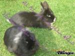 Coniglio Nicki - Maschio ( (6 anni))