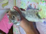 Criceto shakers - ( (4 anni))