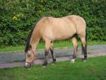 Pony luna - ( (4 anni))