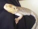 Trooper - Maschio (5 mesi)