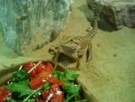 Pet Shop dragon -