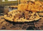 Crocodiles -